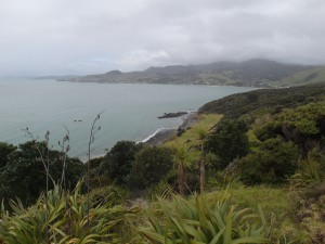 Arai-te-uru Reserve in the  Northland